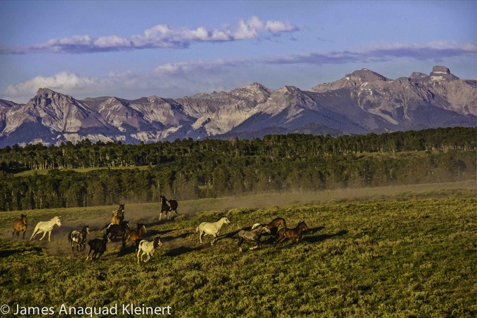 Our Rescues (Rescued Wild & Domestic Herd in Ridgway Colorado)