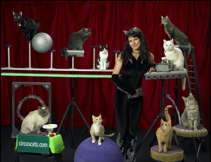 Samantha Martin and her Amazing Acro Cats!
