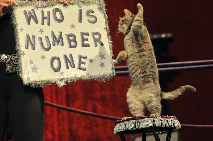 """Who's Number One?"" YOU are, when you help us help kitties across the country by funding our bus project!"