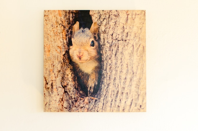 """A print on wood, the """"Home Sweet Home"""" squirrel photograph at 12"""" by 12"""", crafted sustainably and ready to hang."""