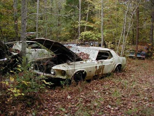 Unfortunately there are a lot of classic Mustangs out there - just rusting away