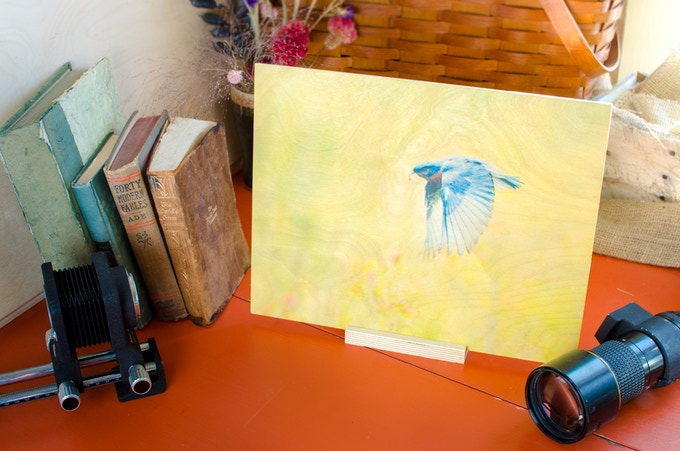 """A print on wood, the """"The Hunter"""" bluebird photograph at 11"""" by 14"""", crafted sustainably and ready to hang."""
