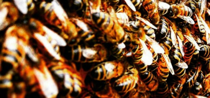 We've already helped to protect 0ver 10 million honeybees