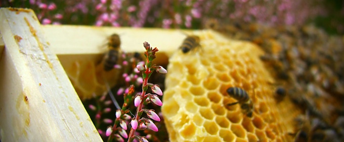 Heather Honeycomb