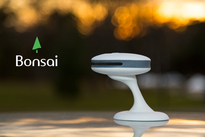 Bonsai with air stand.