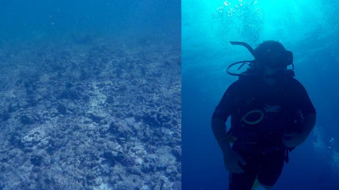 Dead Coral Reefs in the Atlantic / Jonah Bryson diving. Photo by Jonah Bryson