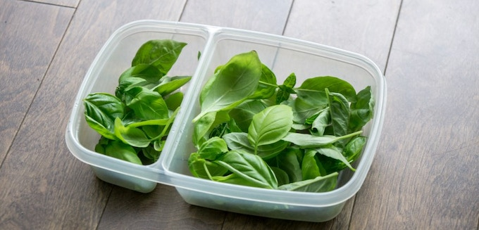 A week's harvest from one Lingot of Basil Big Green.
