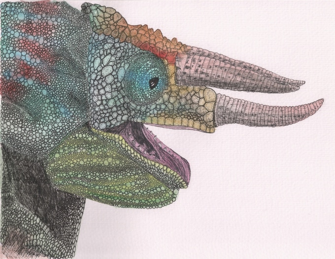 Happy Chameleon, pen and ink and watercolour