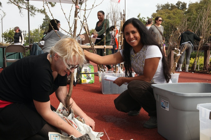 Urban Fruit Trails 'Tree Adoption' and planting at Rueben Ingold Park in Culver City.