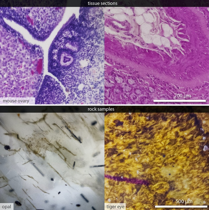 Micrographs of tissue sections and rock samples taken by µPeek