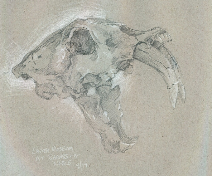 Smilodon Skull by Storn A. Cook