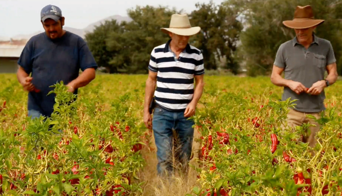 John & Jim Thomas in the Hatch, NM Chile Fields