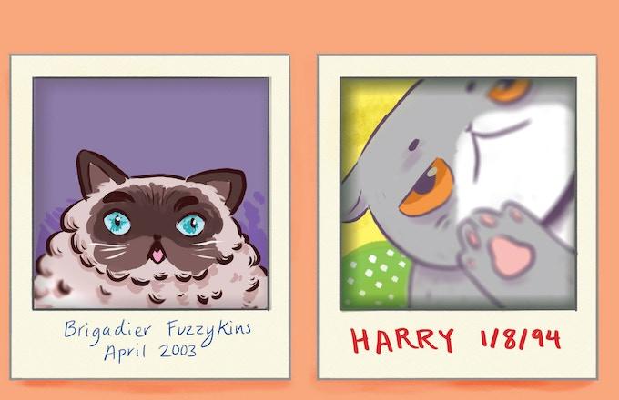 Kitten Selfies, by Cynthia Lee