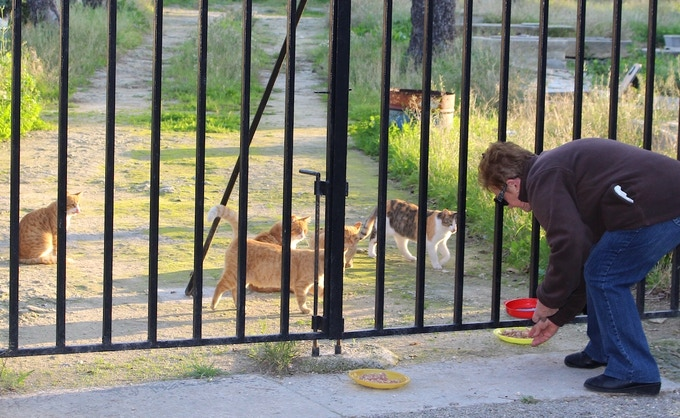 Feeding shy strays in Pietà