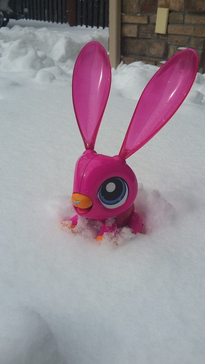 Looks like our kids weren't the only ones enjoying the recent snow day.