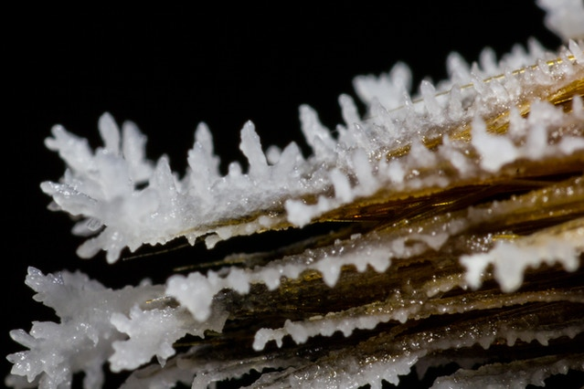 Ice on a brush captured using Adaptalux.