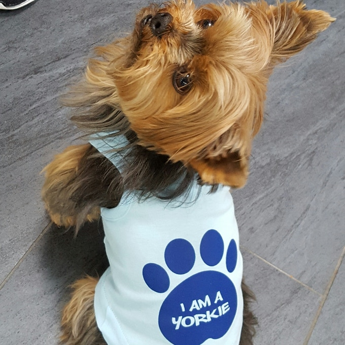 Light blue Yorkie Tank