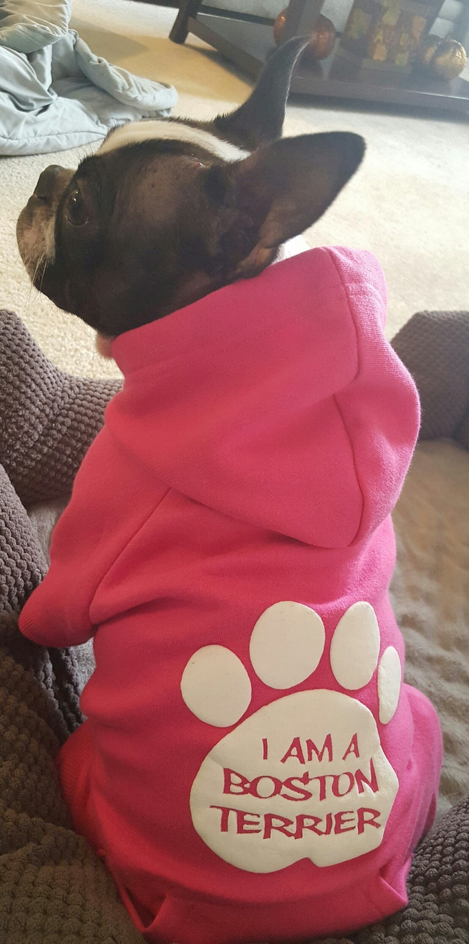 Dark Pink Boston Terrier Hoody!