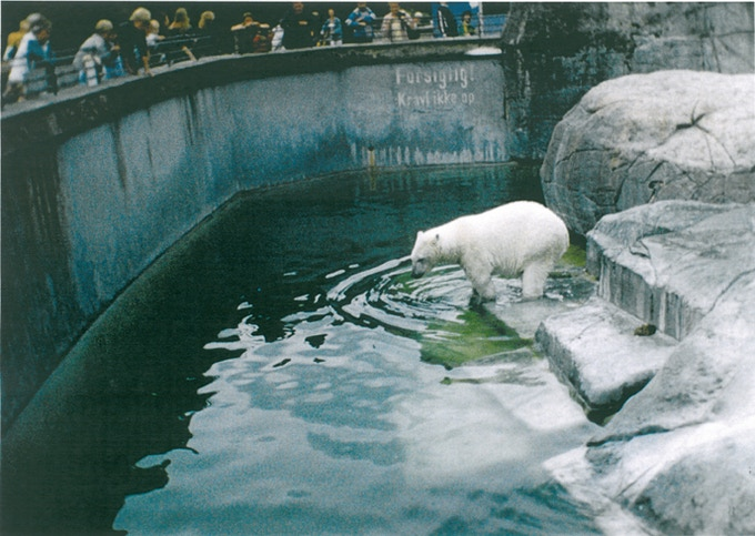 Polar Bear. 2008, 49.1 x 75.5 cm, Edition of 5 + 1 AP
