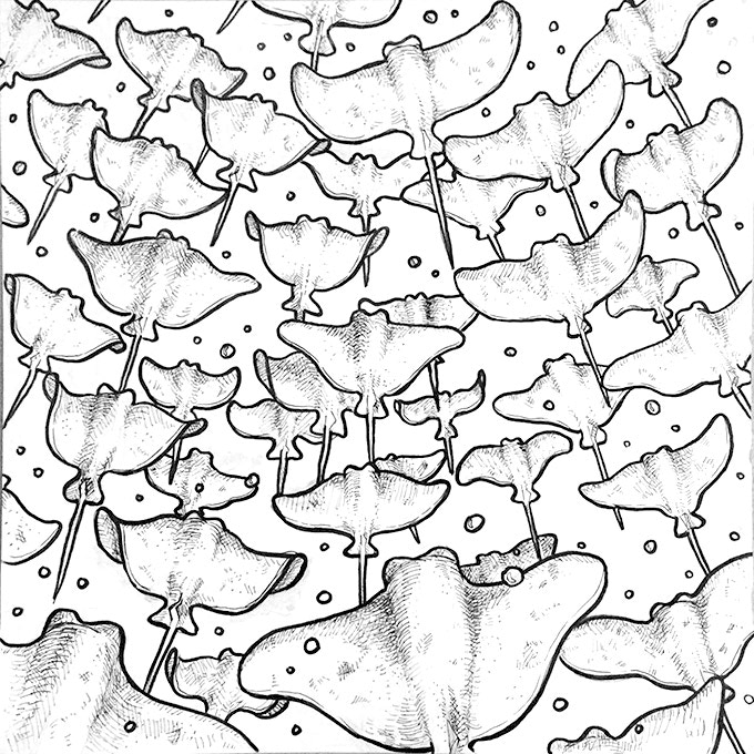 Sting Rays by Nony