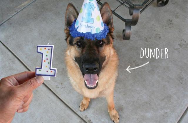 Dunder's 1st Birthday