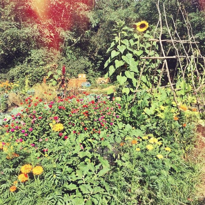 The Chittle Homestead Garden - Year 1