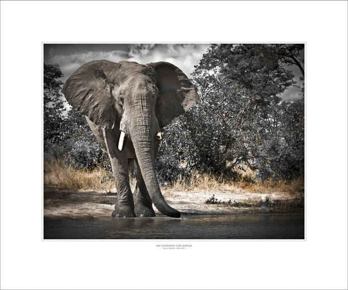 "Limited Edition Fine Art Print ""An Elephant for Africa"""