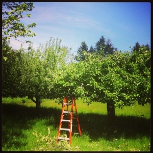 The Chittle Homestead Fruit Orchard