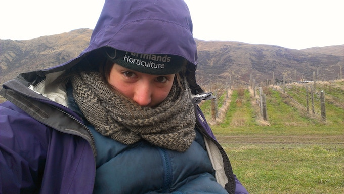Pruning the vines on a chilly New Zealand winter day