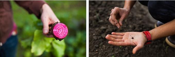 A Farmer's Hands by Audra Mulkern