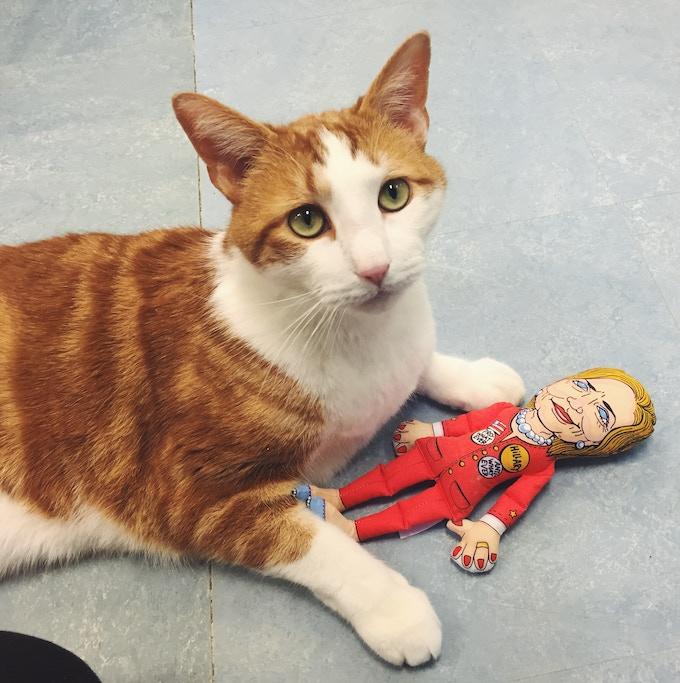 Hillary Cat Toy with Ziggy