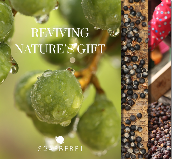 A photobook on Nature's Cleansing Gift - Soapberry