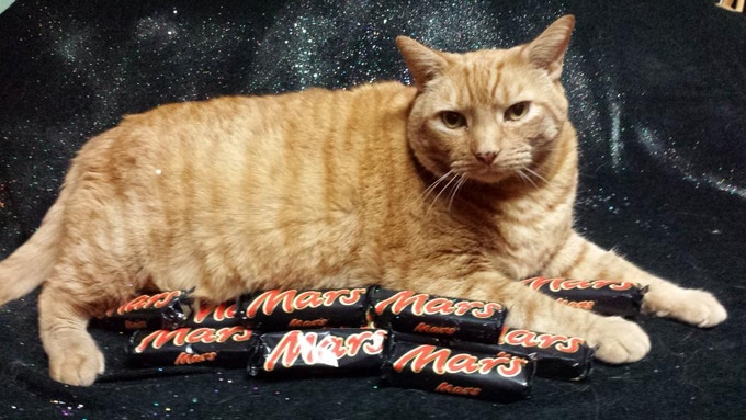 Harley, The First Cat On Mars