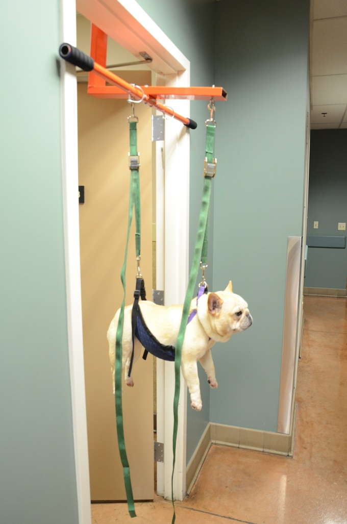 The Doggie Lift The Easiest Way To Cut Your Dog S Nails