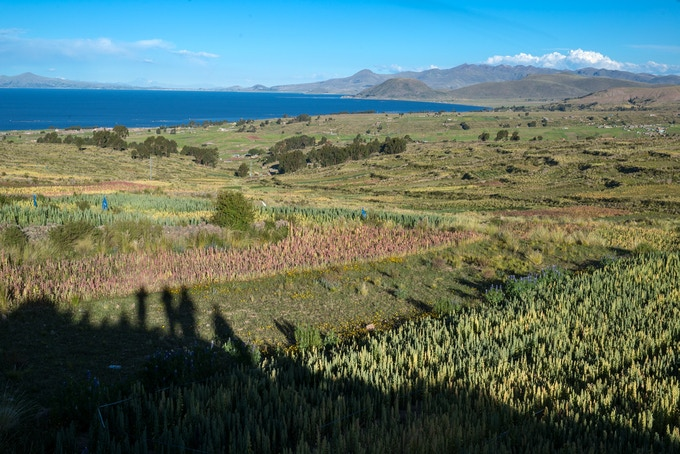 Communal quinoa farms known as Aynokas on the shores of Lake Titicaca