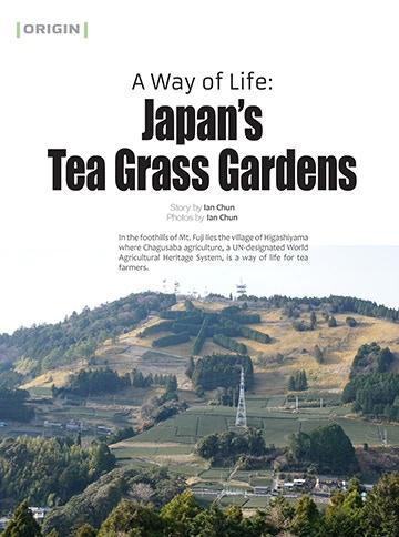 Tea Grass Gardens of Japan