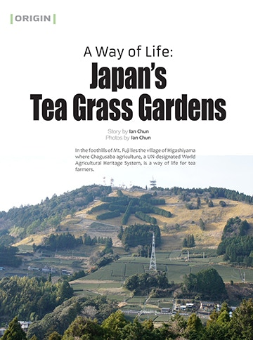 Tea Grass Gardens of Japan