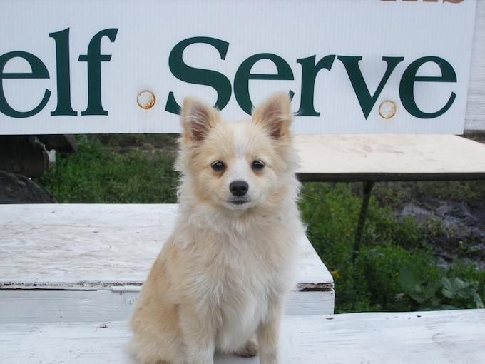 Our farm dog Maddie!