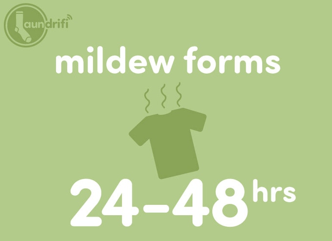 Mildew forms in 24-48 hours