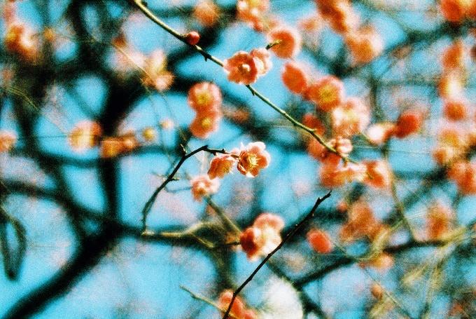 © Kieko Hoshi, Japan