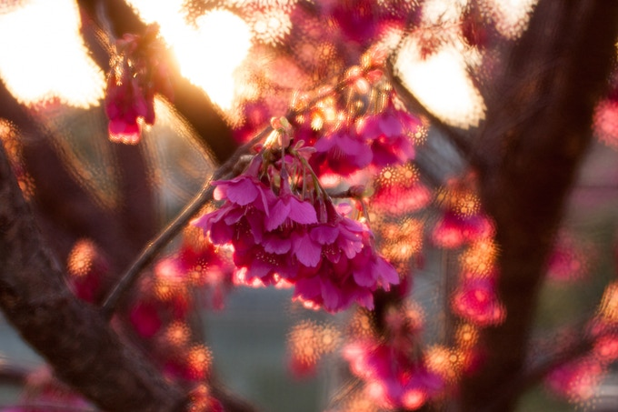 The silky luminous touch of the Lumière aperture plates. © Masataka Odaka, Japan