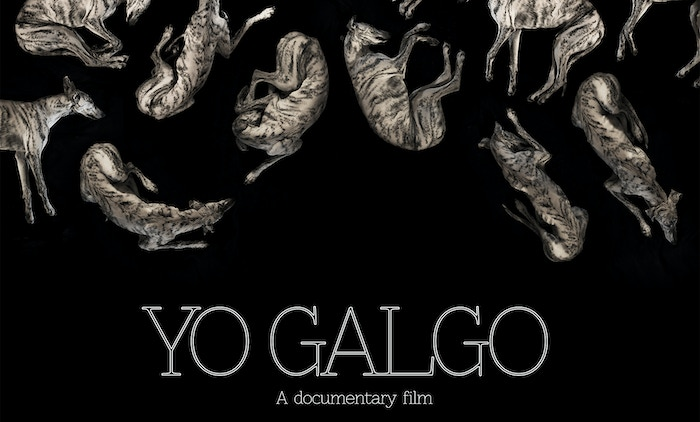 A documentary film about the glory and misfortunes of the Spanish sighthound, the Galgo.