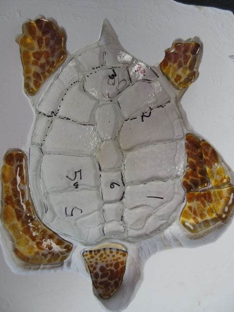 This is the mini Mrs. Loggerhead - scutes will be added to the clear shell base