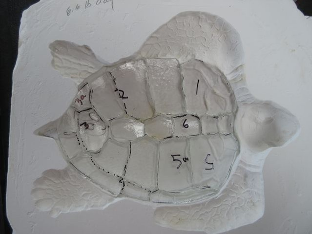 Clear carapace for the miniature Mrs. Loggerhead study