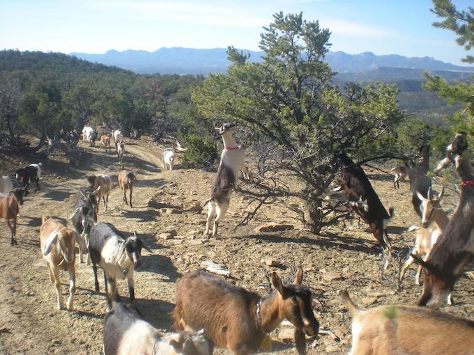 Ecological Land Management, NM