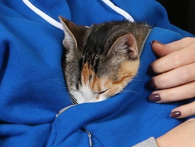 Pets fall asleep so easily in the warm cozy Roodie Hoodie.