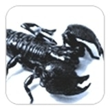 Scorpion Game Design