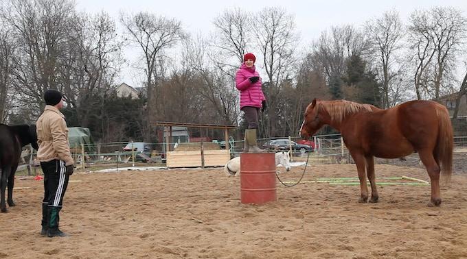 """""""Im direkten Kontakt mit dem Pferd und der Herde ist die Unmittelbarkeit des Momentes gegeben. Belastende Situationen dürfen sich im individuellen Rhythmus des Betroffenen zeigen, bekommen Raum um wahrgenommen und dann verändert zu werden."""" Swierzcek"""