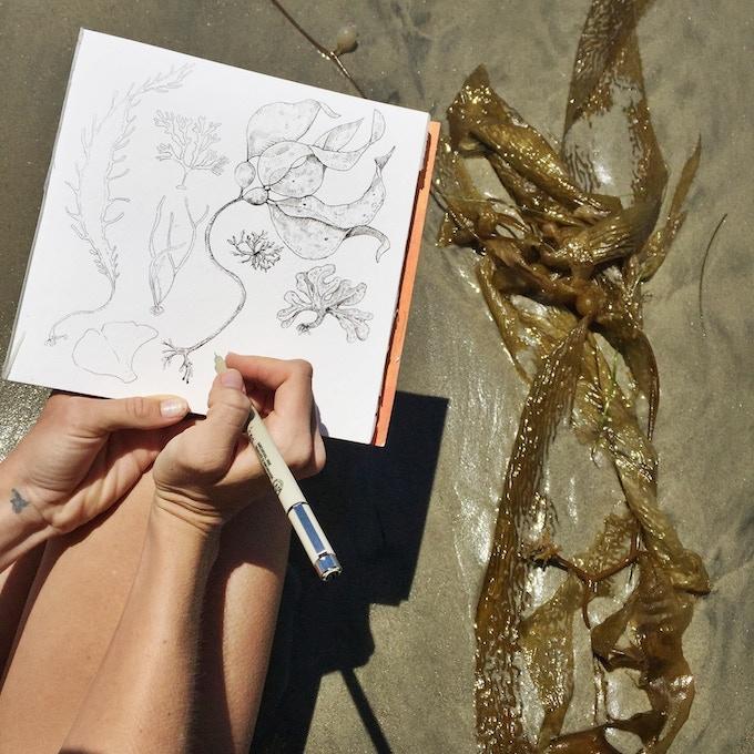 seaweed specimen field study