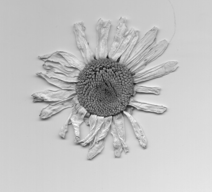 Flower (The actual petals were used on the CD image inside the palms on the disc)